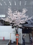 27初桜能2.jpg